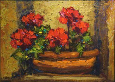Geraniums in a Pot