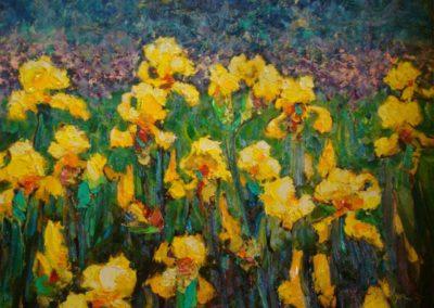 Yellow Iris Field